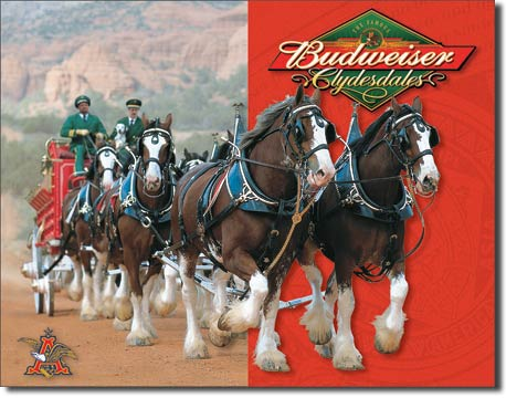 1281 - Bud Clydesdales